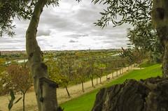 Parque Juan Carlos I - V