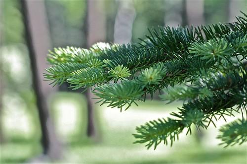 Pine Tree State 03