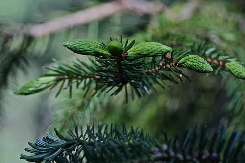 Pine Tree State 04