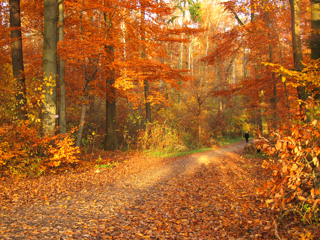 Image result for autumn crispness