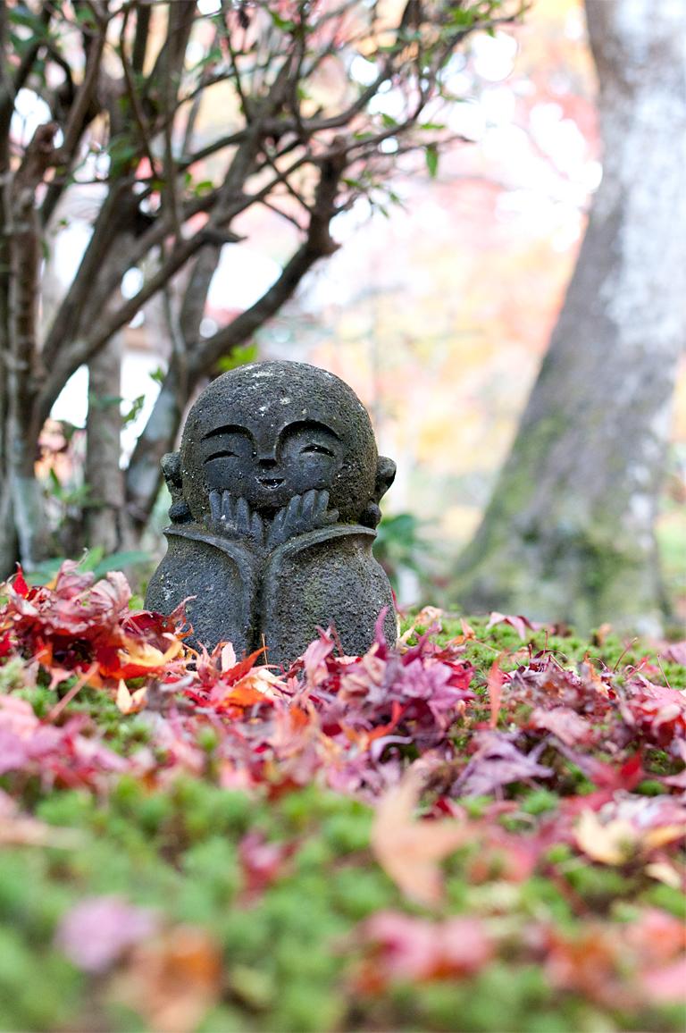 かわいい|圓光寺