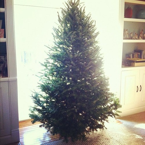 She's a beauty. Tonight we light her up. It's tradition. #christmas #onlyarealtreeforme #tradition