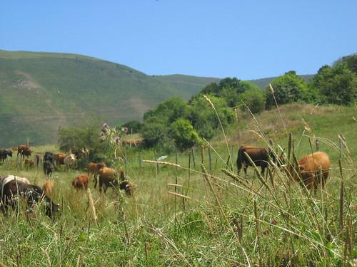Paisaje sur Cantabria