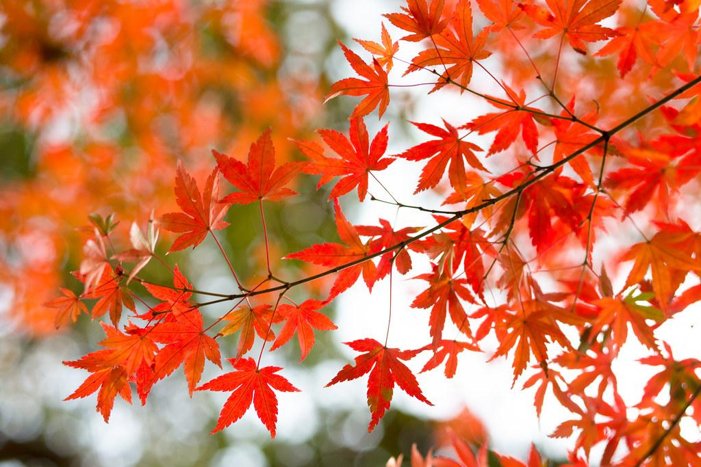 Kyoto-shi, Kyoto Prefecture, Japan, 0.008 sec (1/125), f/3.5, 85 mm, EF85mm f/1.8 USM