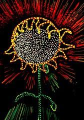 SunBurst of Light