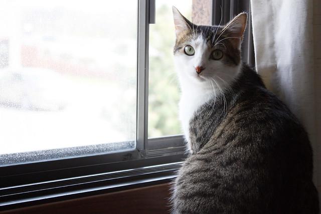 percy cat.