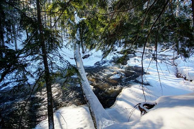 Winter woods, Marquette County, Michigan