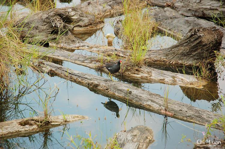 羅東林業文化園區-貯木池18.jpg