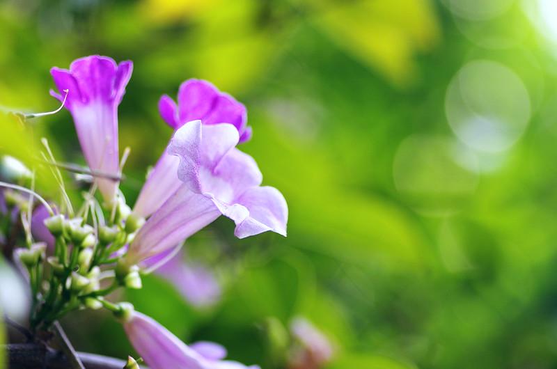 粉紅的花朵