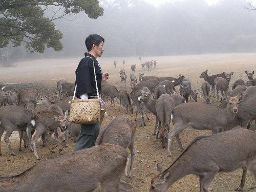 ホルンが響く奈良の冬の風物詩『鹿寄せ』@奈良公園