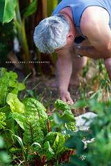 Old man in his garden, gardening, Australia
