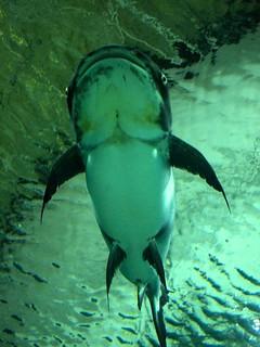 Lindo pez de río (4 metros)