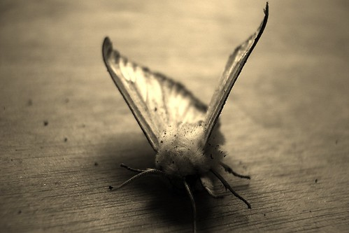 mothredo by Nature Morte