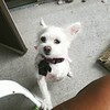 Wednesday the dog wants to be picked up #dogsofinstagram