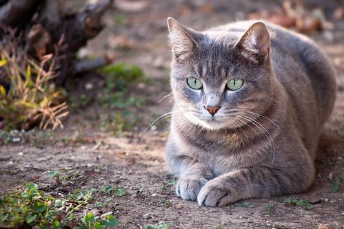 Bobbie, the bob-tailed cat