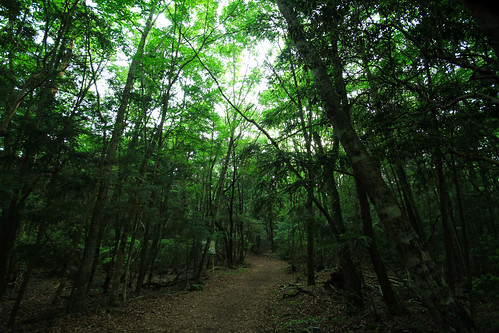 Entrance of Aokigahara Forest