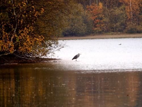 Pêche d'automne