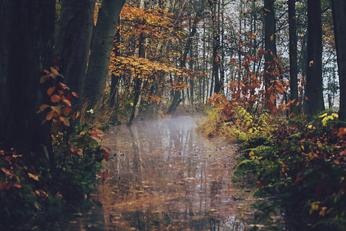 autumn trees red brown mist reflection nature water leaves yellow misty fog creek forest woodland reflections still weeds woods quiet foggy fresh moist 100mmf28macro