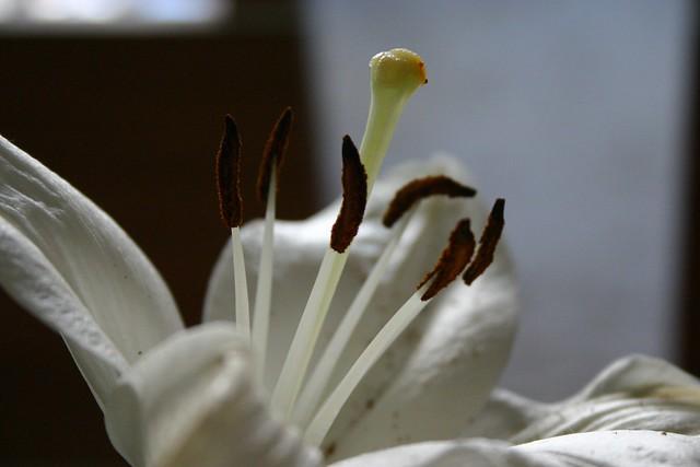 flores_4_20121102