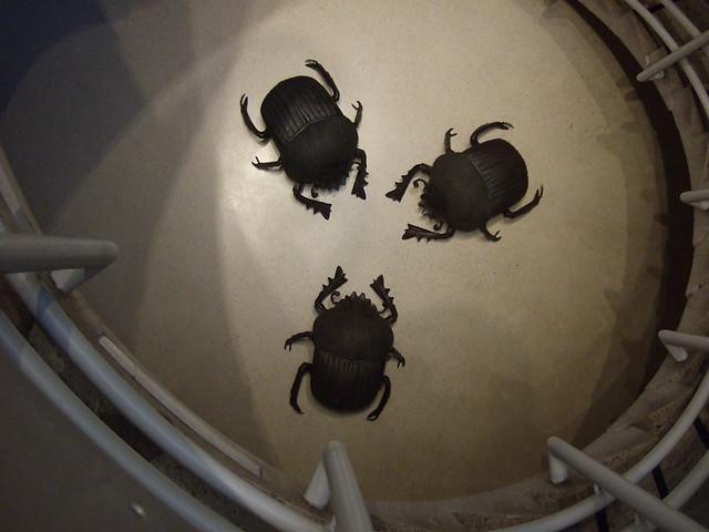 beetles8