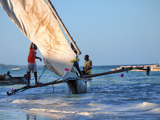 Dhow sailing race - IV