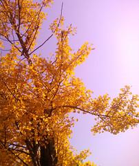 Hello Sunshine ~ The tree