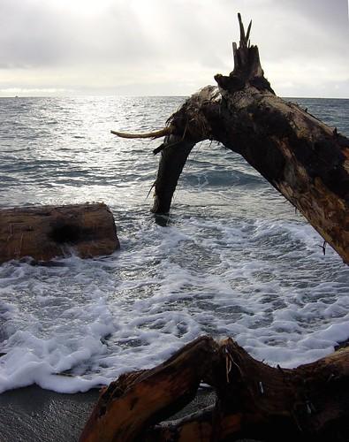 Vancouver Island Winter