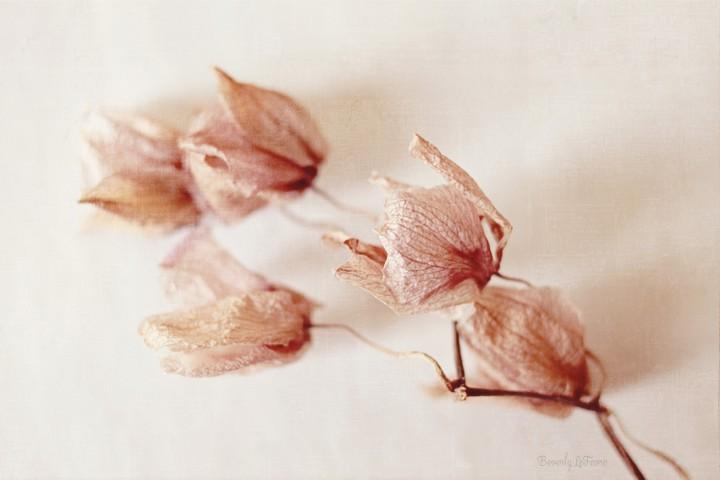forgotten orchid