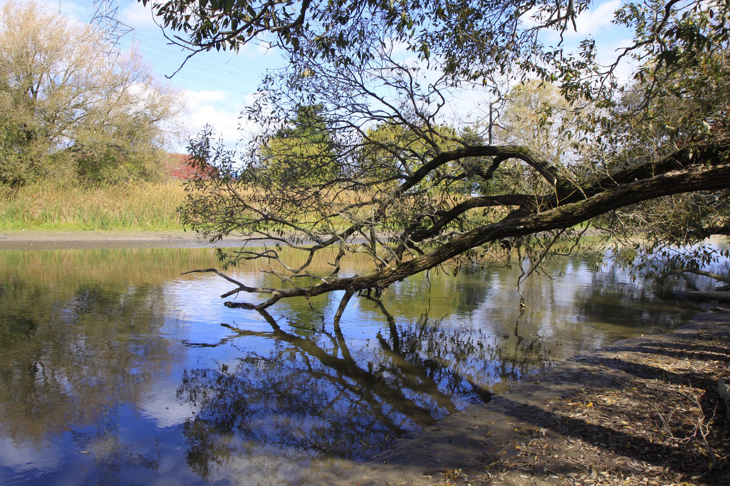 bville creek