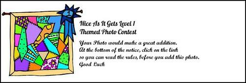 contest notice1
