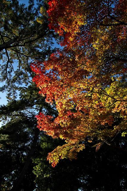 2012 秋、京都の旅行。