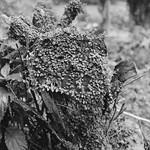 Ivy-clad Tree Stump