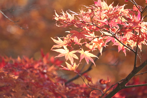 Kyoto (2012-Nov-25)