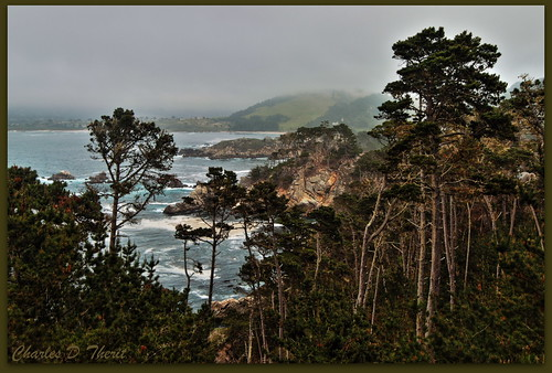 carmel california unitedstates usa explore canon 1div 1635mm singleimagehdr hdr me2youphotographylevel1 me2youphotographylevel2 me2youphotographylevel3 rememberthatmomentlevel1 rememberthatmomentlevel2 me2youphotographylevel4 landscape cityscape seascape scape landscapes 1d mark iv ef1635mm f28l ii usm ef1635mmf28liiusm america northamerica eos1d eos1dmarkiv eos 4 mark4 tree trees treescape best wonderful perfect fabulous great photo pic picture image photograph