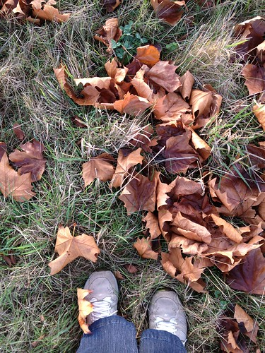 The remnants of fall