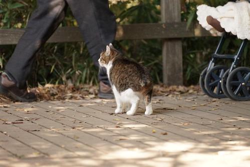 石神井公園の尻尾のない猫ちゃん