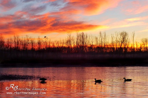 winter sky lake clouds sunrise dawn geese tn nashville tennessee wildlife