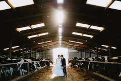 [Free Images] People, Couple, Events, Wedding, Kiss, People - Animals, Cattles / Cows ID:201212041600