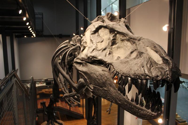 福井県立恐竜博物館 骨格模型 その7