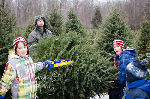 Christmas tree quest 2012-3