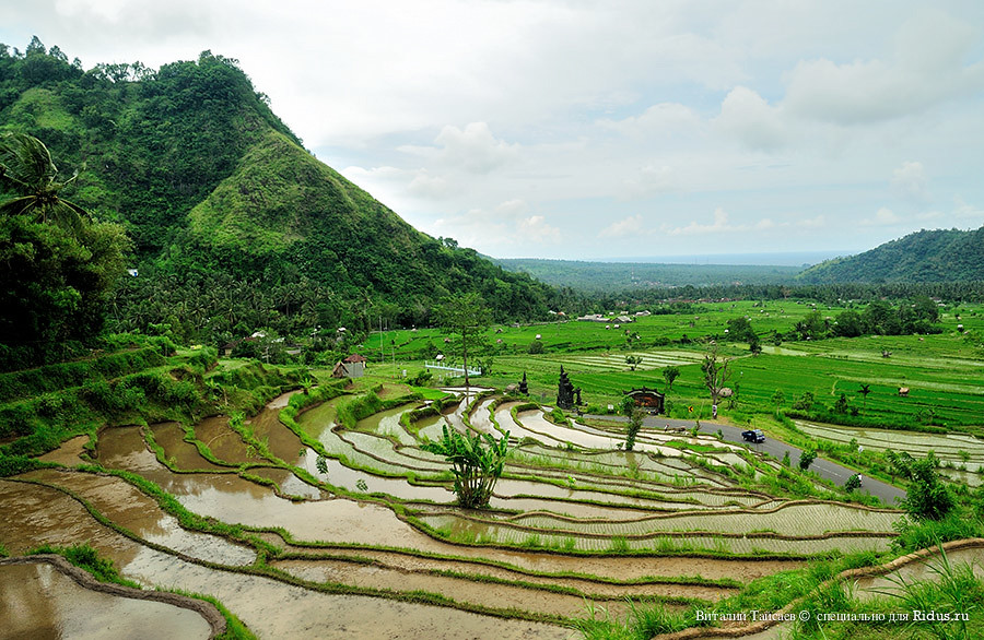 Rice fields in Bali