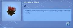 Nicotiana Plant