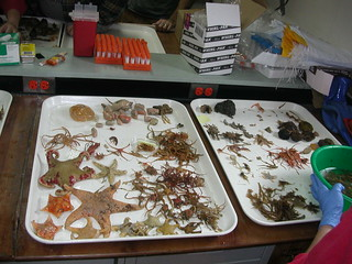 Sea organisms being sorted