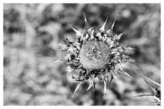 thorns and webs ~ espinhos e teias