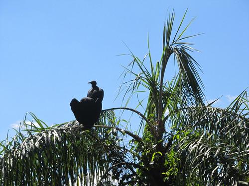 Les chutes d'Iguazu et ses oiseaux qui planent
