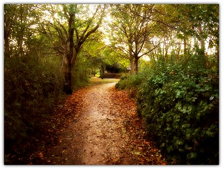 Autumn along the path..