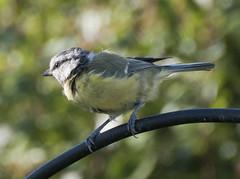 animal, nature, fauna, emberizidae, beak, bird, wildlife,