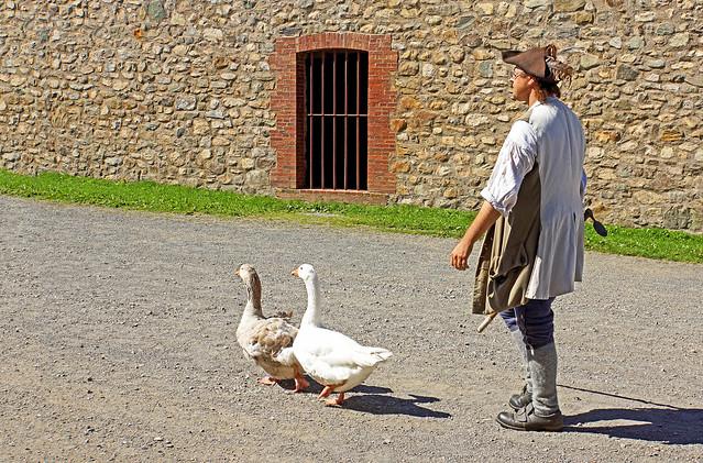 DSC02374 - The Duck Walk....