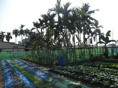 蘇先生的小菜園。