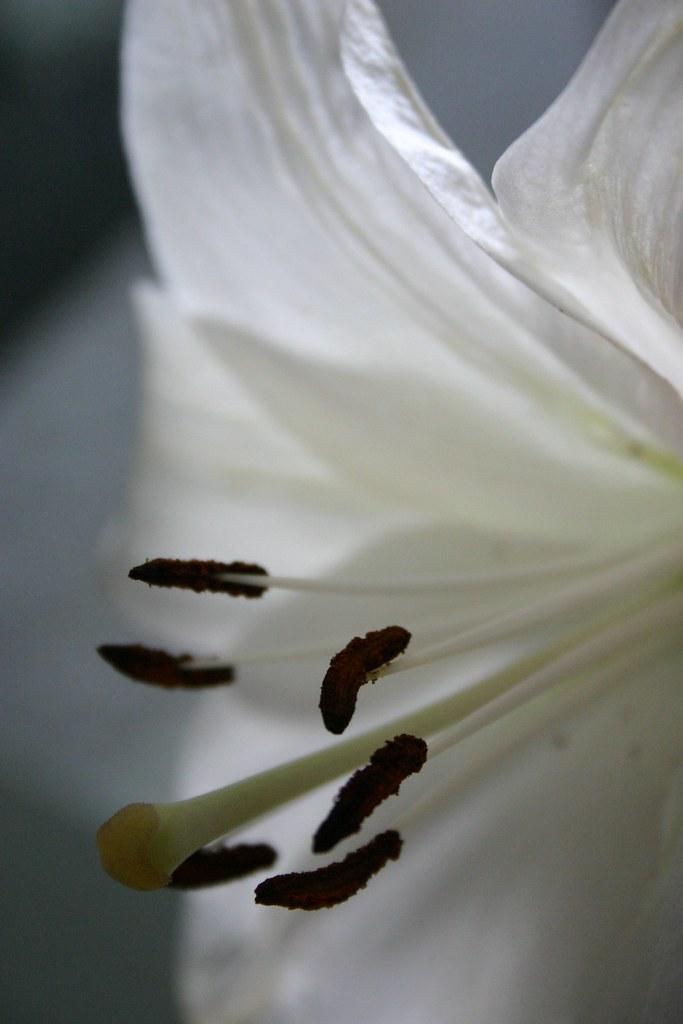 flores_2_20121102
